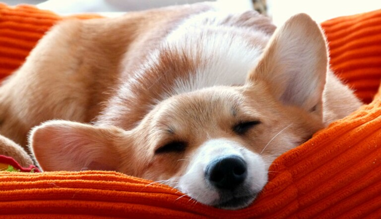 [VIDEO] Pourquoi dort-on si mal hors de son propre lit ?