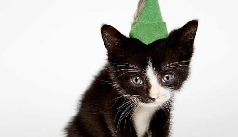 Cats in hats : des chats-peaux à adopter (PHOTOS)