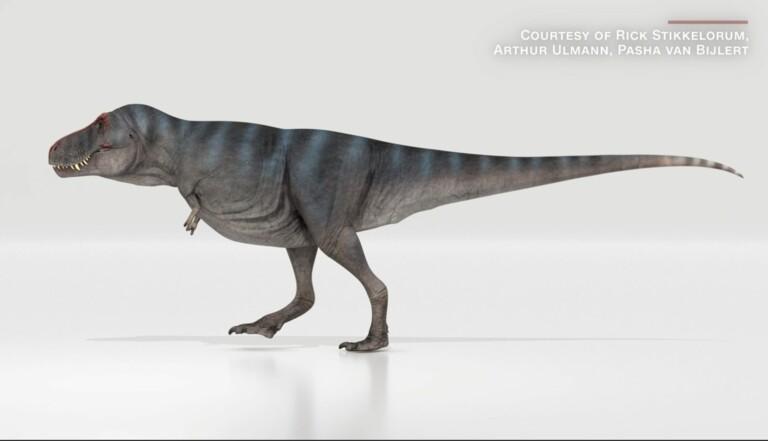 On en sait plus sur la façon dont les T. Rex se déplaçaient, et le roi des dinosaures n'avait pas de quoi se vanter