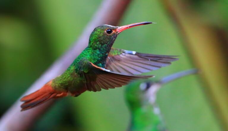 Au Canada, un projet d'oléoduc suspendu grâce à des colibris