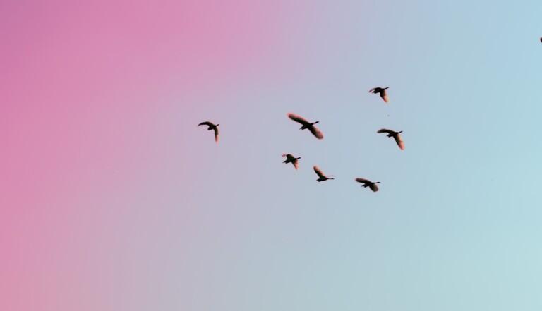 Il y a moins d'oiseaux sur Terre qu'on l'imaginait, pire: les effectifs baissent