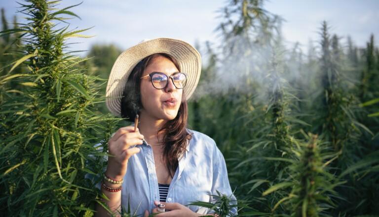 Légalisation du cannabis : des parlementaires demandent un référendum à Emmanuel Macron