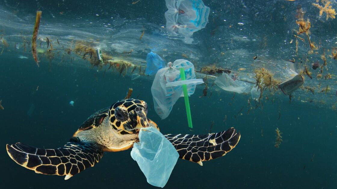 La majorité des déchets retrouvés dans les océans provient de la restauration à emporter
