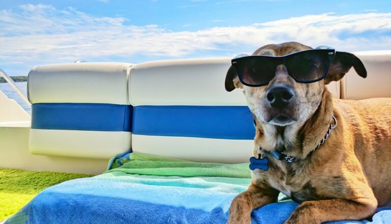 Les chats et les chiens prennent eux aussi des coups de soleil. Comment les protéger ?